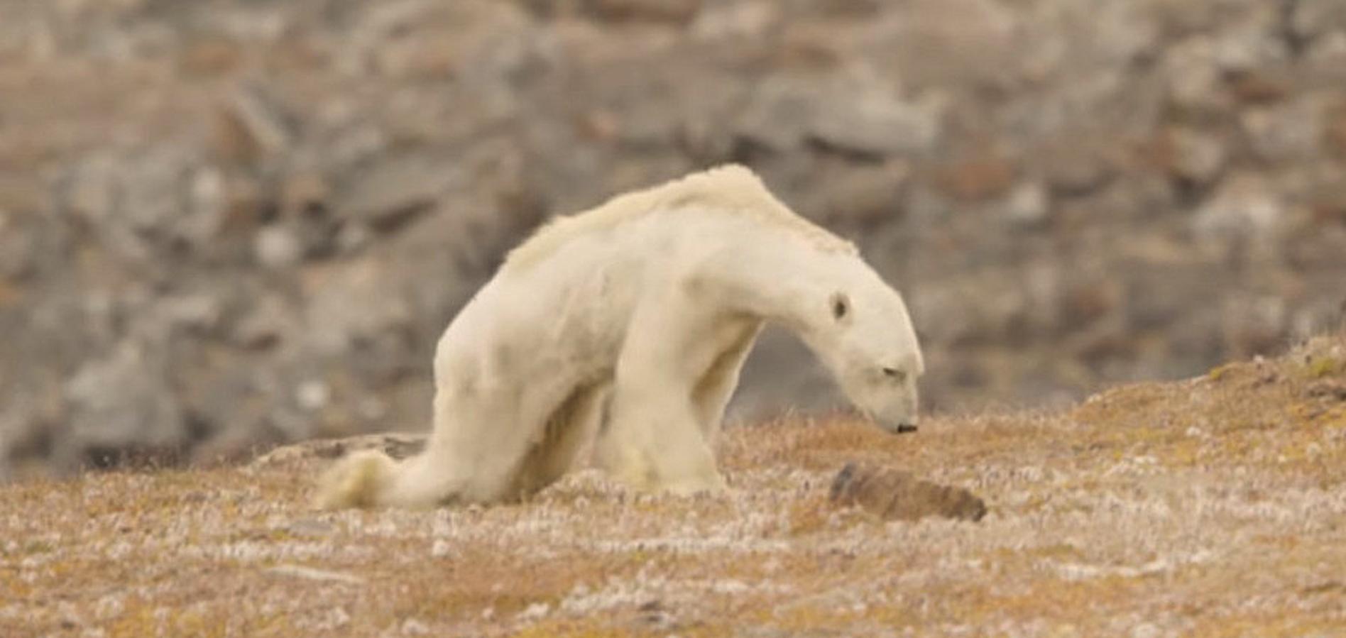 Klima Tiere sterben
