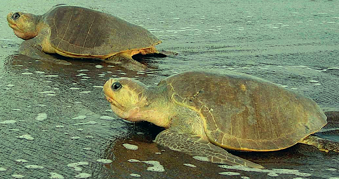 Tierschutz Costa Rica